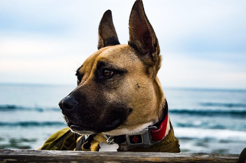 Dog looking at sea shore against sky