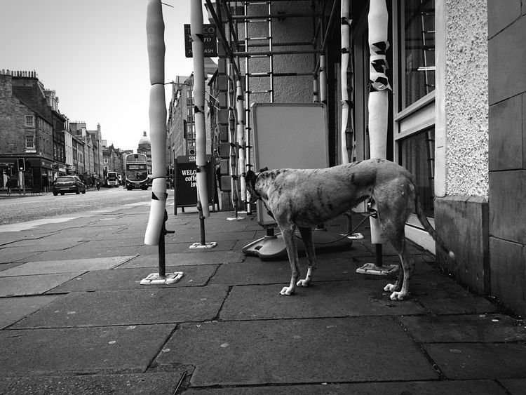 Check This Out IPhoneography University Life Afterschool  Streetphotography Dog