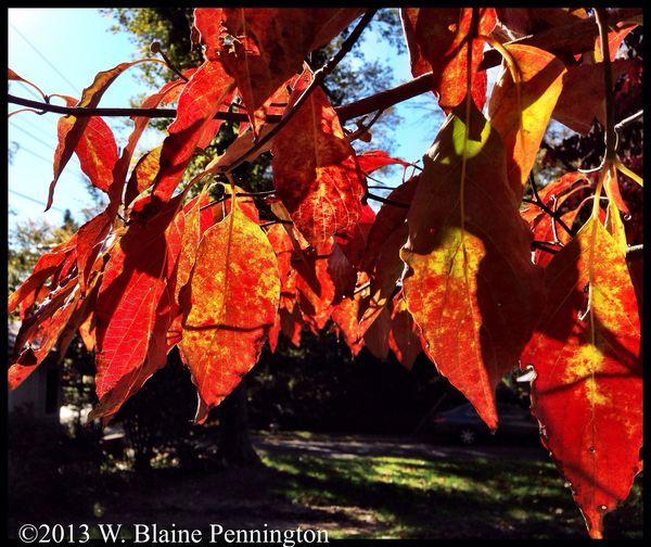 Peak Fall Leaves Autumn Trees