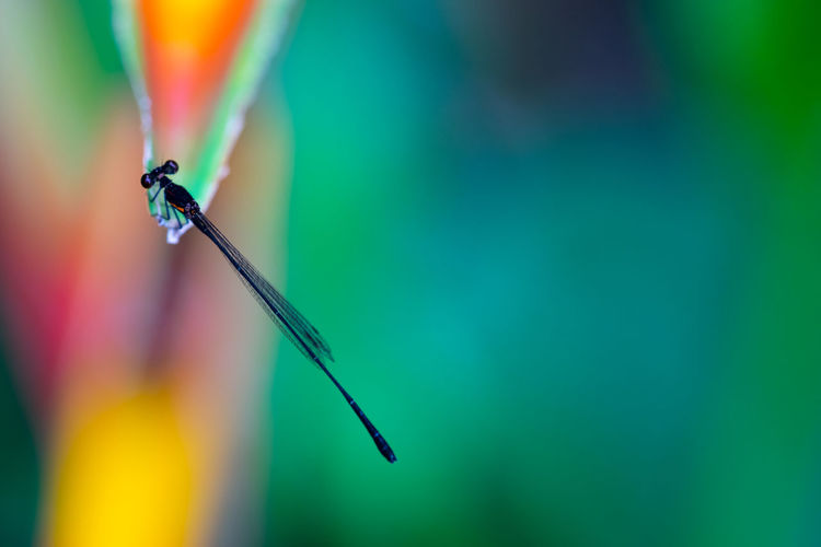 High angle view of damselfly on leaf