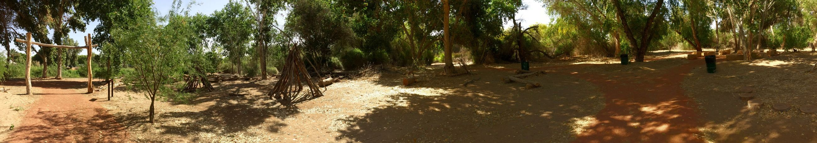 Panoramic view of sitting area on one of the trails next to the Colorado River at West Wetlands Park, Yuma, AZ.✨ West Wetlands, Yuma, AZ Nature Photography IPhone Photography Tree Plant Land Growth Forest Nature Tranquility No People Sunlight Beauty In Nature Day Tranquil Scene Green Color Outdoors Scenics - Nature Non-urban Scene Panoramic