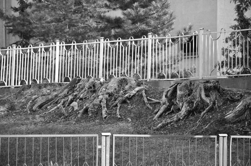 Blackandwhite Collapse Contrast Creepy Dead Tree Death Decay Earth Fence Geometry Life Nature No People Opposition Outdoors Roots First Eyeem Photo