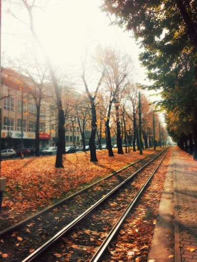Autumn Dream... Paint Mood Autumn Colors Blur City Fall Weather Condition Urban Tram Fog Autumn Colors Streetphotography Taking Photos Made In Romania Nature Traveling Track Railroad Track Rail Transportation Transportation Tree Nature Diminishing Perspective Plant Mode Of Transportation Public Transportation vanishing point Railroad Station Platform Architecture Railroad Station