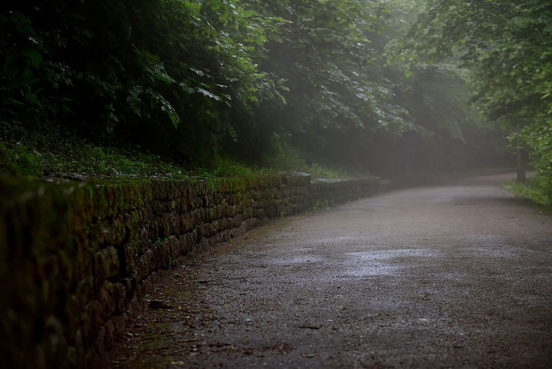 Road Wet Nature The Way Forward Outdoors Landscape Beauty In Nature Tree Scenics No People Winding Road Day Grass Water Freshness Sky