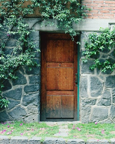 Door Door Entrance Plant Wood - Material Architecture Built Structure House Doorway Building Exterior No People Day Ivy Close-up Picoftheday Mexico City Taking Photos Neighborhood The Architect - 2017 EyeEm Awards
