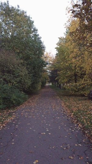 autumn in the city Autumn In The City Tree Plant The Way Forward Direction Road Diminishing Perspective Nature No People Growth Tranquility Beauty In Nature Autumn Outdoors Tranquil Scene Day Leaf Footpath