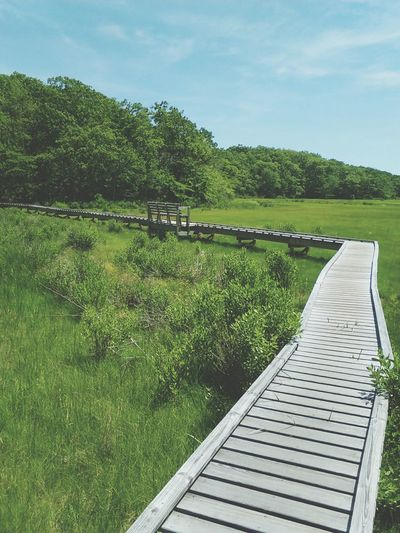 Boardwalk Photography Boardwalk Nature Is Amazing Relaxing View Hiking Adventures