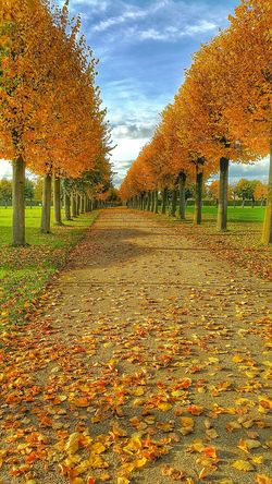 Xanten Archeological Complex Fall Fall Leaves Fallcolors Orange Red Yelow Leaves Trees Germany Nature Autumn Europe Europa