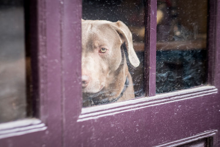 I've always loved taking pictures of dogs. Candid Candid Photography Streetphotography Street Photo Street Photography Photography Dogs Dog Pets Looking Through Window Window Close-up Dog Lead Transparent