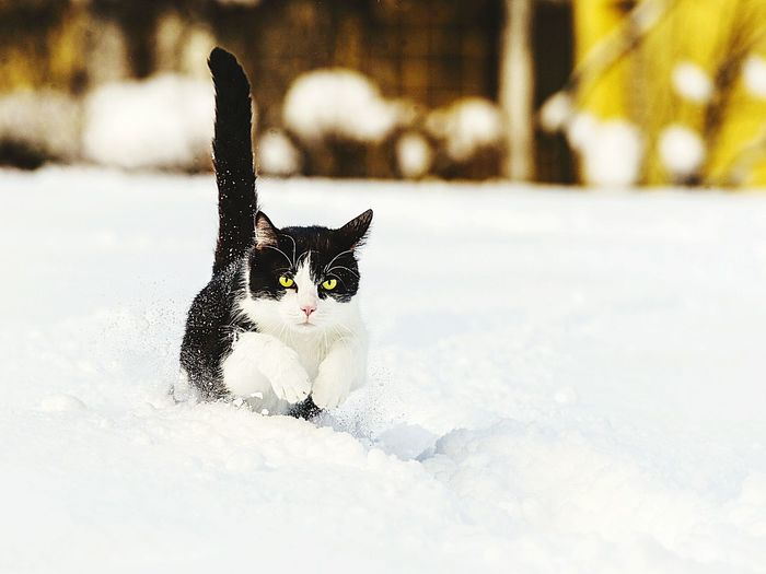 Portrait Of Cat Running On Snow Covered Field