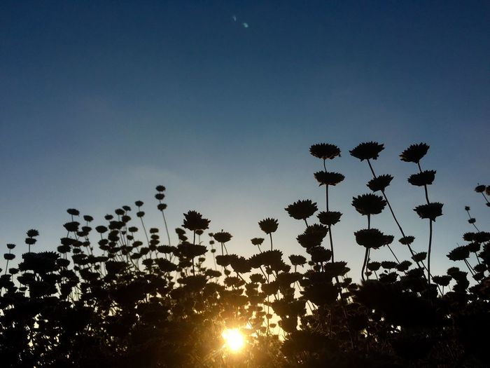 Sunset Shillouette