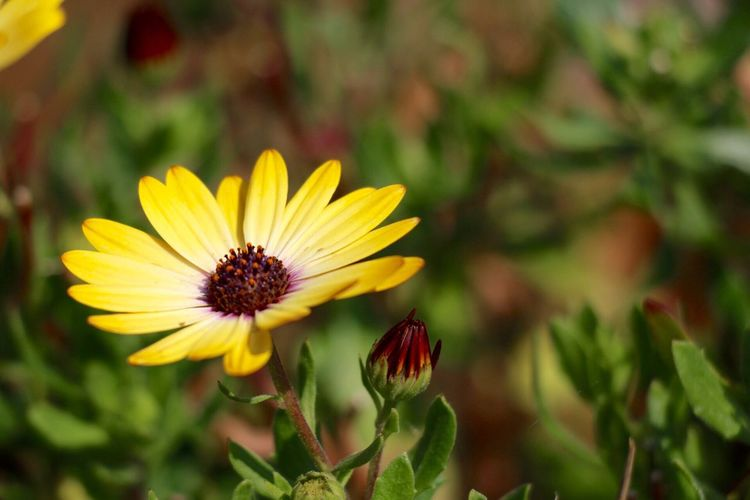 Close-up of fresh yellow flower blooming in park