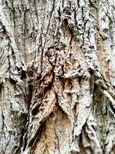 Textured  Texture Textures and Surfaces Textures Textured Effect Tree Backgrounds Tree Trunk Full Frame Textured  Bark Rough Close-up Plant Bark Cracked Detail Woodpecker