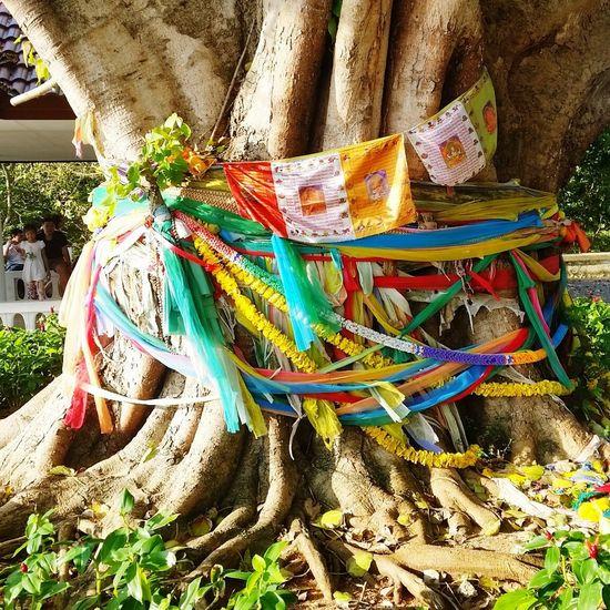 Tree Old Tree Budha Tree