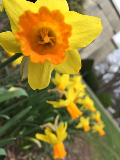 Yoursobeautiful Flower Nature EyeEm
