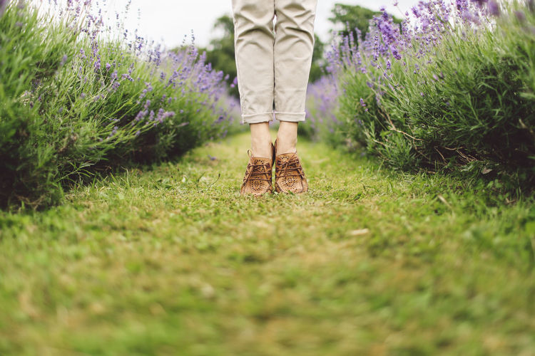 Beauty In Nature Day Feet Field Flowers Grass Grassy Green Green Color Growth Landscape Lavanda Lavander Lavander Flowers Lavanderfields Lawn Nature No People Outdoors Plant Selective Focus Shoes Surface Level Tranquil Scene Tranquility Out Of The Box