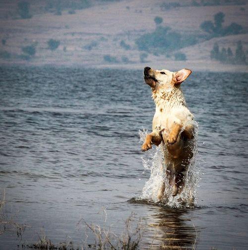 Dog on a sea