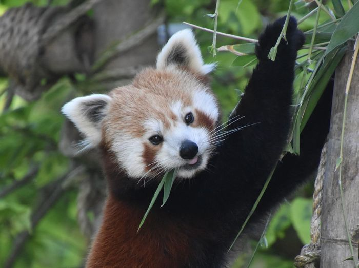 Close-up portrait of animal on tree