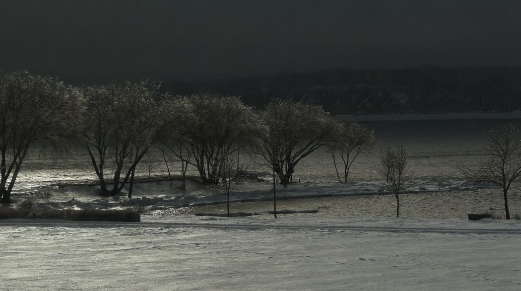 Iceland Nature Outdoors St-Lawrence Seaway Tranquility Winter Trees