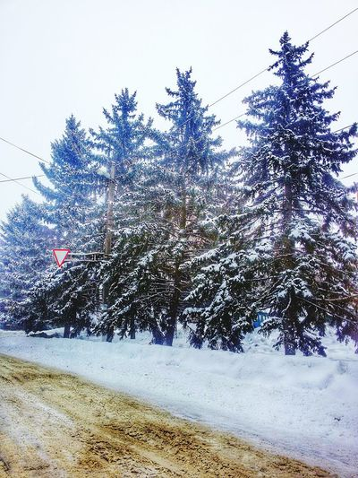 First Eyeem Photo Like ? ❤ Mysity Beautiful Nature Winter Lovely Weather