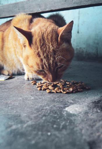 Close-up of cat sleeping on footpath