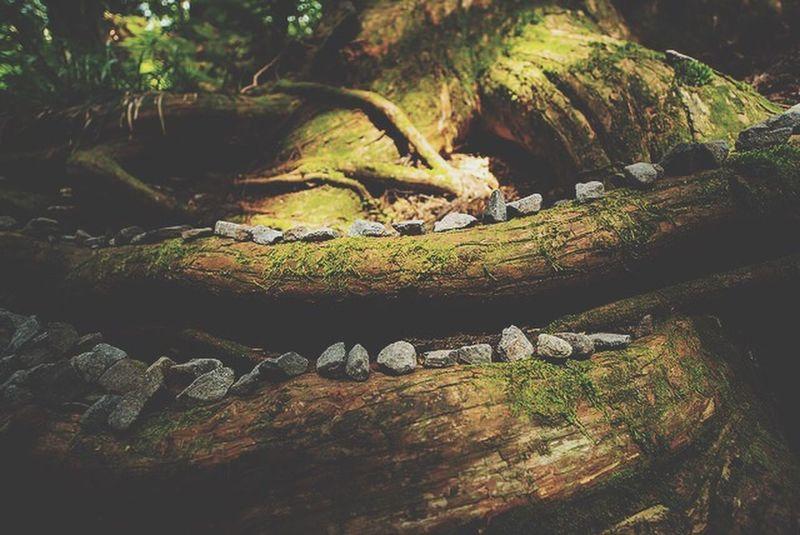 Japann Ancient Forest Beautiful