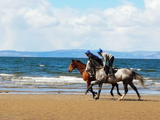 Taking Photos Taking Pictures Beachphotography Ayr Ayrshire Scotland 💕 Scotland Sea And Sky Seaside Seascape Seaside_collection Seaside Beach Sea Horse Photography  Horse Racing Horse Riding At The Beach Horse Riding Horse Life Horse Power