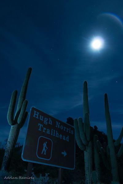 Hiking Trail Trailhead Long Exposure Saguaro Arizona Langzeitbelichtung Night Sky Moon Moonlight Carnegiea Gigantea