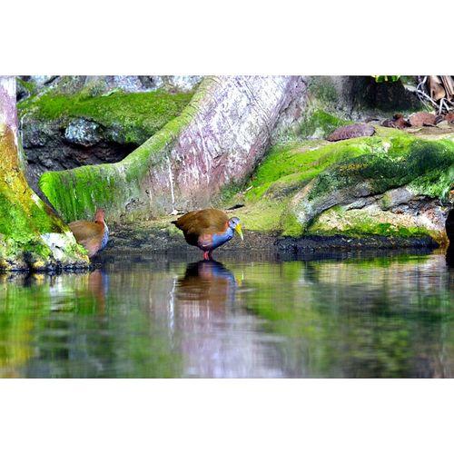 bosque inundado en cosmocaixa de Barcelona ( spain ) Great Museum Colores De La Naturaleza Barcelona, Spain Cosmocaixa