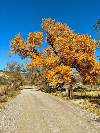 """""""San Fidel Autumn No. 2"""" A discovery of pure gold on a side street just off historic Route 66, in the little village of San Fidel, New Mexico. Golden Color Side Street Autumn Autumn colors Cottonwoods In Autumn Cottonwood Fall Fall Beauty Fall Colors New Mexico Photography New Mexico New Mexico Skies Route 66 Tree Sky Nature No People Beauty In Nature Blue Clear Sky Scenics - Nature"""