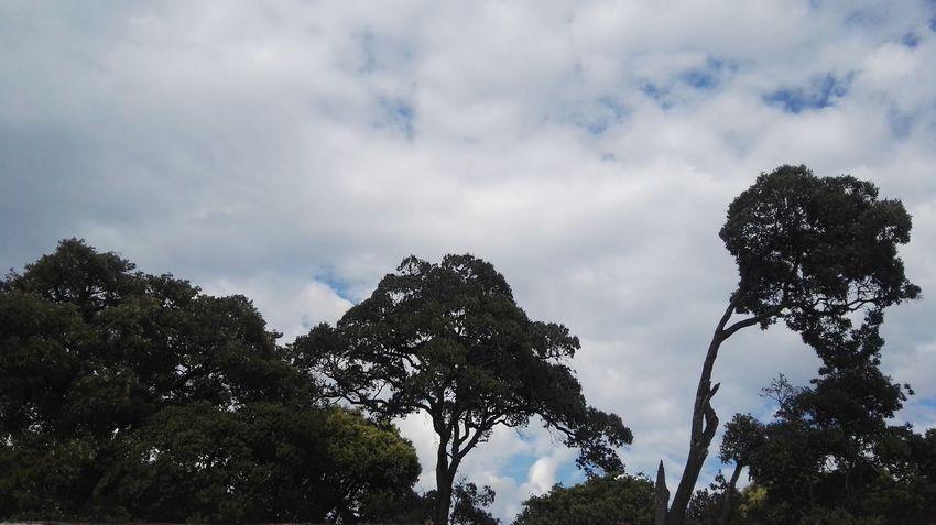 树 Tree Tree Area Forest Sky Cloud - Sky