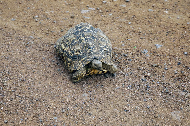High angle view of tortoise on beach