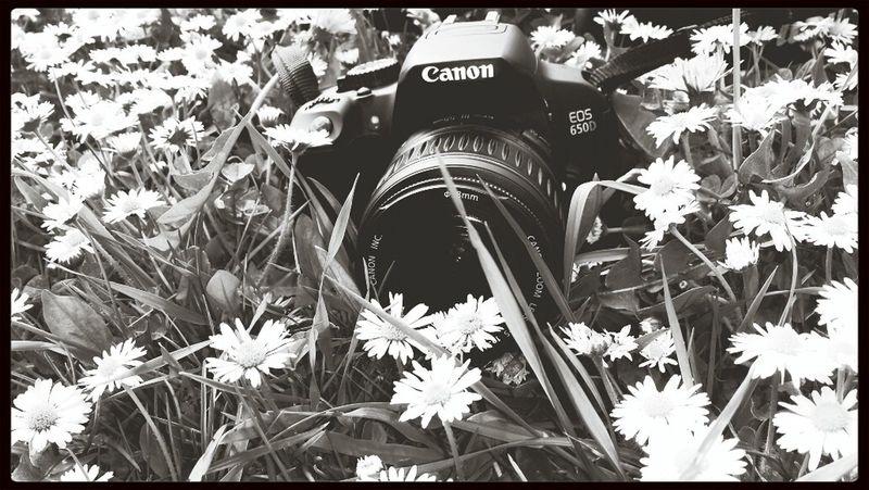 Canon Taking Photos Love Summer