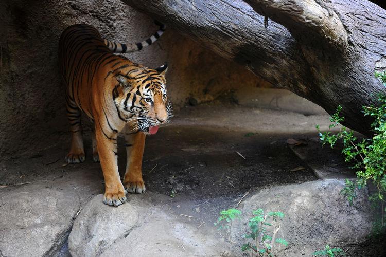 San Diego Zoo,