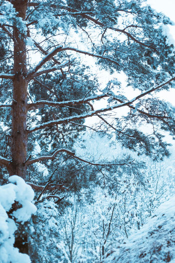 Winter wonderland Wood Beauty In Nature Branch Close-up Cold Temperature Day Forest Freshness Frozen Growth Ice Ice Crystal Low Angle View Nature No People Outdoors Scenics Snow Snowflake Snowing Tranquil Scene Tranquility Tree Weather Winter