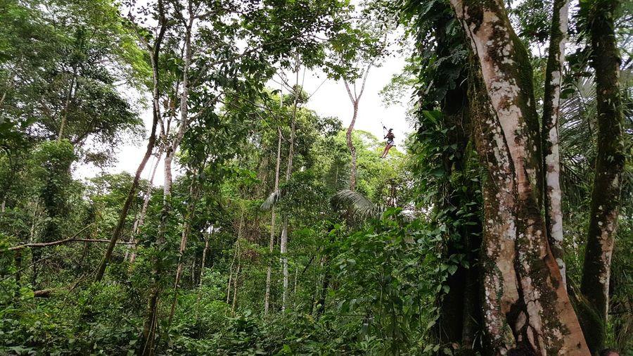 Swing Tropical Rainforest 18metershigh