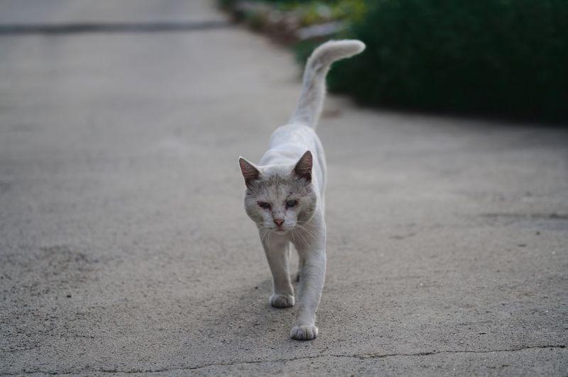Cat City Day