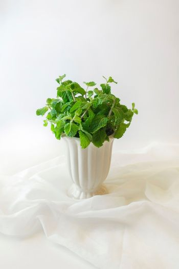 Papermint Mint Leaves Food Studio Shot Freshness Green Color Indoors  No People Leaf White Color Vegetable Herb Healthy Eating