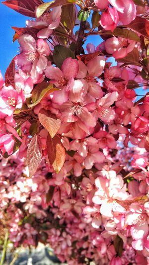 Flower Spring DLUFL