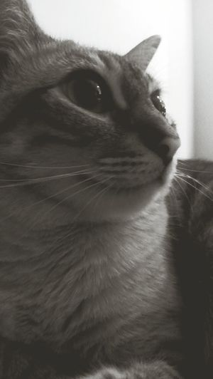 lily Cute Pets Cat