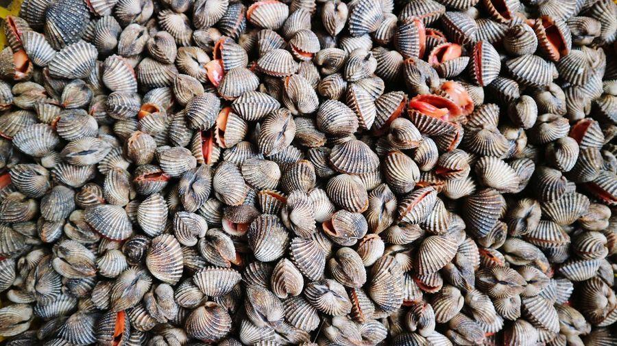 Full frame shot of shells for sale
