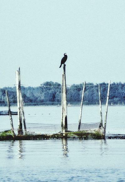 Relaxing Sailing Enjoying Life żeglowanie Sieci Rybackie Fishing Nets Bird Ptak Siedzi Czeka Kormoran Cormorant  Nature's Diversities