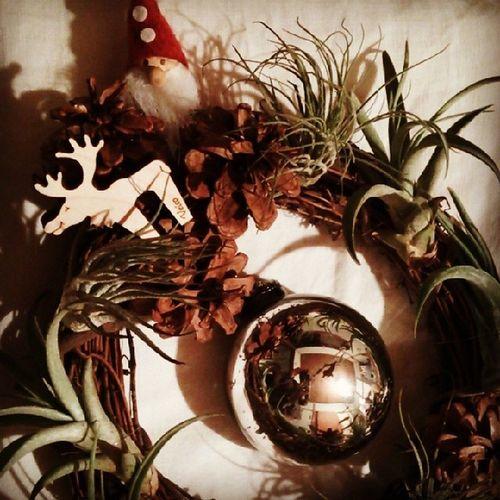 エアプランツのクリスマスリース でけたー☆Christmas Handmade