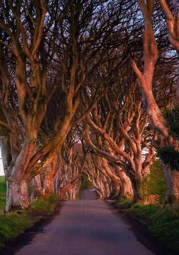 Beauty In Nature Day Landscape Nature No People Outdoors Road Scenics Spring Sunset The Dark Hedges The Way Forward Tranquil Scene Tranquility Travel Tree Tree Trunk United Kingdom The Great Outdoors - 2017 EyeEm Awards Neighborhood Map The Great Outdoors - 2017 EyeEm Awards