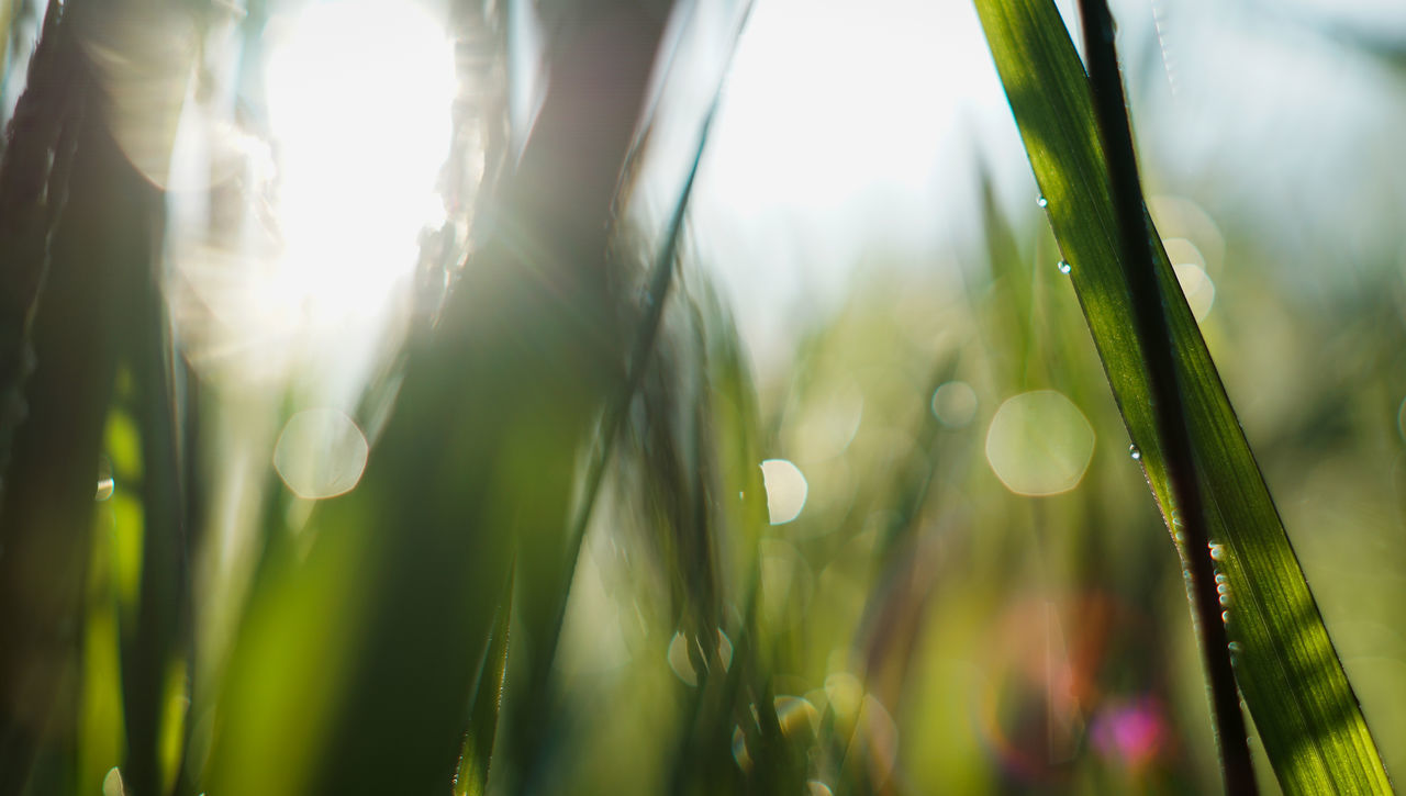 plant, growth, beauty in nature, green color, close-up, nature, day, selective focus, sunlight, focus on foreground, no people, water, drop, lens flare, blade of grass, wet, freshness, tranquility, outdoors, dew, bright, purity
