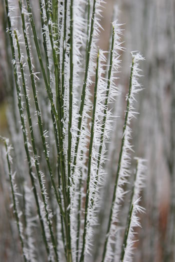 Close-Up Of Frost On Plant