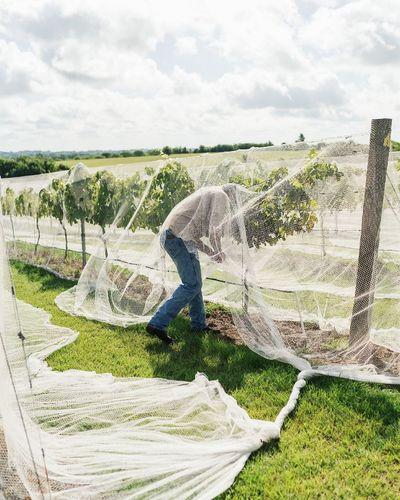 Vineyard Working Rural Scene Agriculture Field Pattern Sky Grass Cloud - Sky