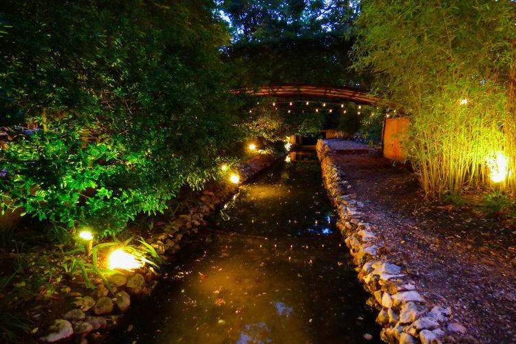 Illuminated footpath in park at night