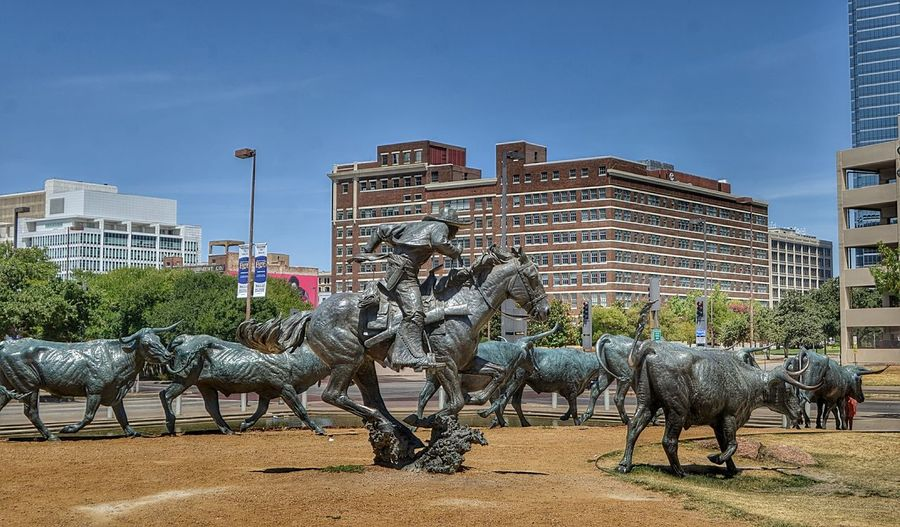 Cattle Drive, Dallas, Texas Actual Locat Architecture Bronze Building Exterior Cattle, Livestock, Beast, Brute City Creek Dallas, Pioneer Park Landmark LifeSize Livestock Longhorn Nikon D5100  No People Outdoors Sculpture Shawnee Trail Statue Tourist Attraction  Trammel Crow Adapted To The City
