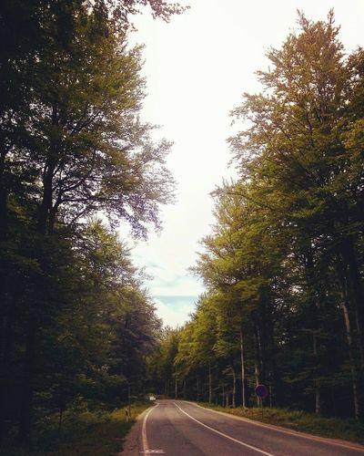 유럽여행 Trevel 여행 크로아티아 Croatia 플리트비체 Plitvice Plitvice National Park 걸어서 On Foot 가는길